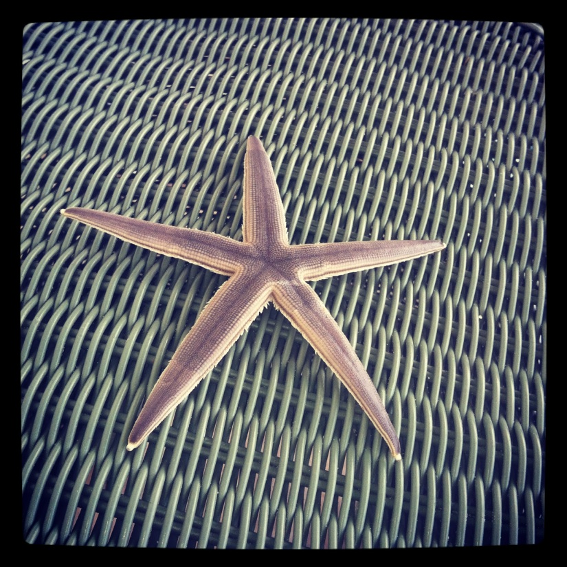 My cousin Blake found this starfish on the beach.  Poor l'il guy lost a limb later that day.